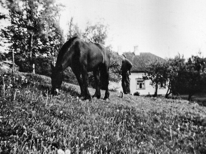 Johan Birkeland og hest
