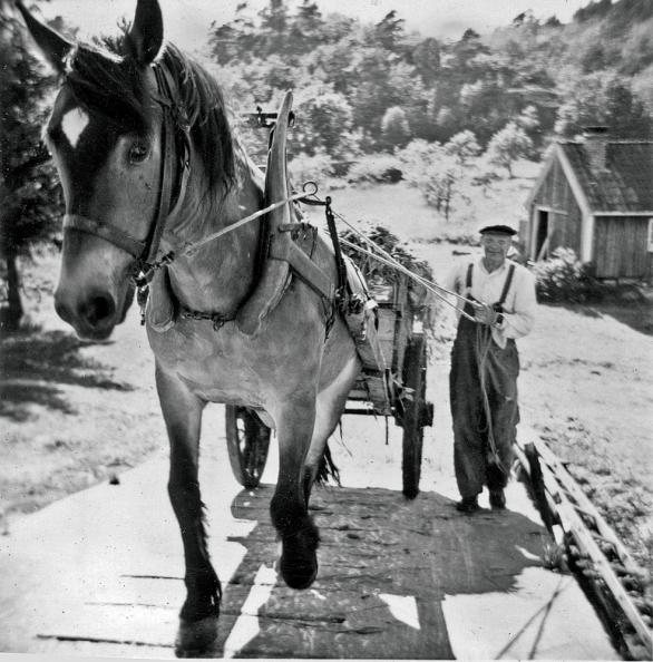 Daniel med hesten Prins