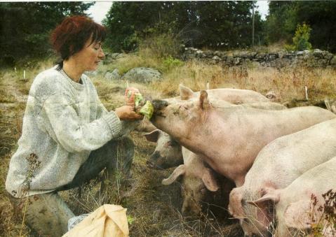 hilde gro og grisene