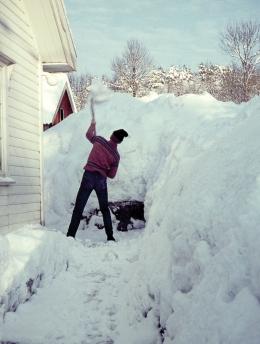 Knut måker snø